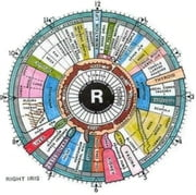 An Informative Guide About Iridology
