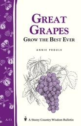 Great Grapes