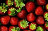 A Crash Course on How to Grow Strawberries