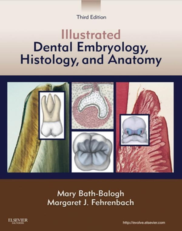 Illustrated Dental Embryology Histology And Anatomy E Book Dr