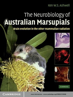 The Neurobiology of Australian Marsupials Brain Evolution in the Other Mammalian Radiation