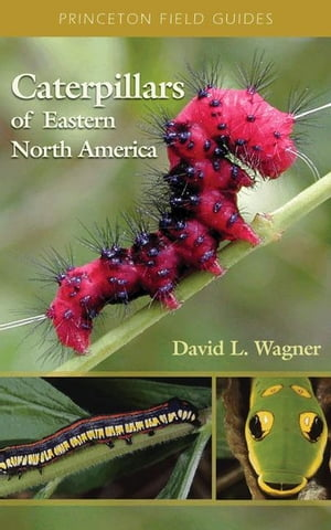 Caterpillars of Eastern North America A Guide to Identification and Natural History