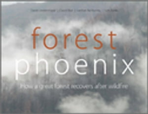 Forest Phoenix How a Great Forest Recovers After Wildfire