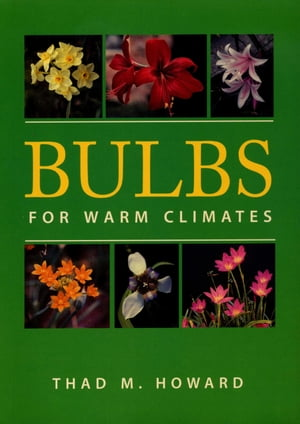 Bulbs for Warm Climates