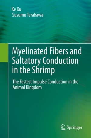 Myelinated Fibers and Saltatory Conduction in the Shrimp