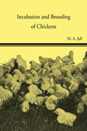 Incubation and Brooding of Chickens