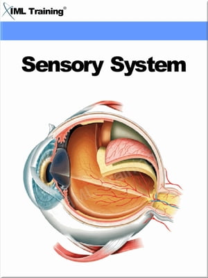Sensory System (Human Body) Includes Anatomy,  Physiology,  Assessment,  Special Sense,  Vision (Sight),  Hearing (Auditory),  Smell (Olfaction),  Taste (Gus