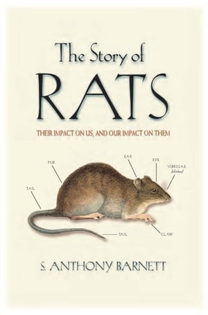 The Story of Rats Their impact on us,  and our impact on them