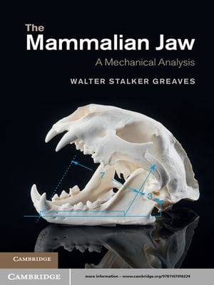 The Mammalian Jaw A Mechanical Analysis