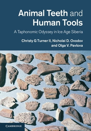 Animal Teeth and Human Tools A Taphonomic Odyssey in Ice Age Siberia