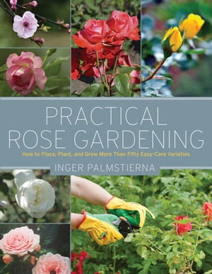 Practical Rose Gardening How to Place,  Plant,  and Grow More Than Fifty Easy-Care Varieties