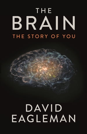 The Brain The Story of You