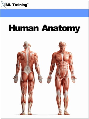 Human Anatomy (Human Body) Includes Anatomy,  Physiology,  Human Body,  Tissues,  Integumentary,  Fascial,  Skeletal,  Muscular,  Digestive,  Respiratory Breat