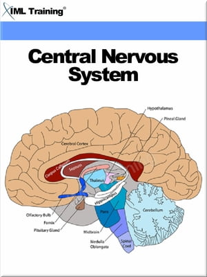 Central Nervous System (Human Body) Includes Anatomy,  Physiology,  Nervous System,  Physical Assessment,  Diseases,  Disorders,  Seizures,  Trauma,  Head,  Sp