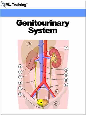 Genitourinary System (Human Body) Includes Anatomy,  Physiology,  Physical Assessment,  Urinary System,  Diseases,  Disorders,  Catheterization,  Kidney,  Bla