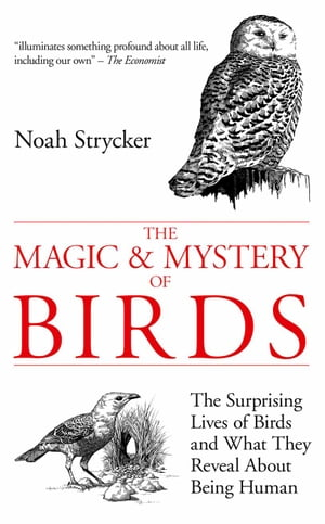 The Magic and Mystery of Birds The Surprising Lives of Birds and What They Reveal About Being Human