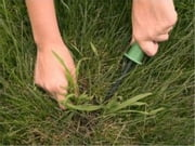 How To Get Rid of Crabgrass ebook by Rogelio Brown