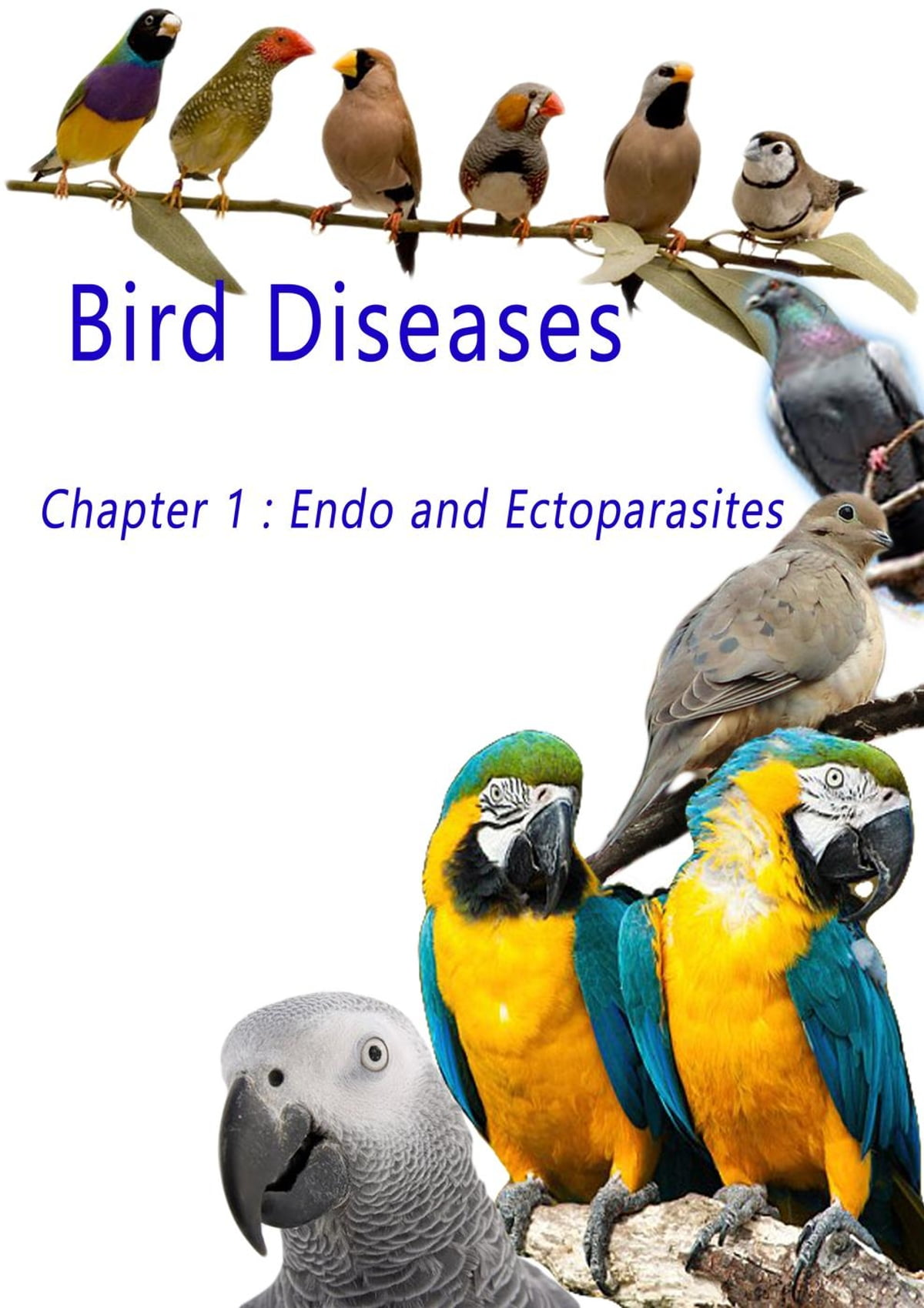 Diseases of domestic birds: a selection of sites