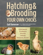Hatching & Brooding Your Own Chicks - Chickens, Turkeys, Ducks, Geese, Guinea Fowl ebook by Gail Damerow