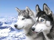 A Beginners Guide to Siberian Huskys ebook by John Silver