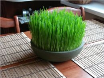 How to Grow Wheatgrass ebook by Victor Marlish
