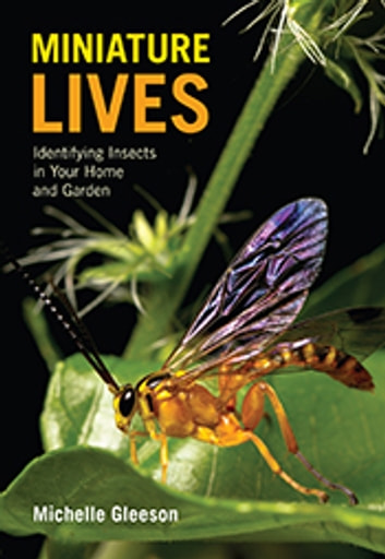 Miniature Lives - Identifying Insects in Your Home and Garden ebook by Michelle Gleeson