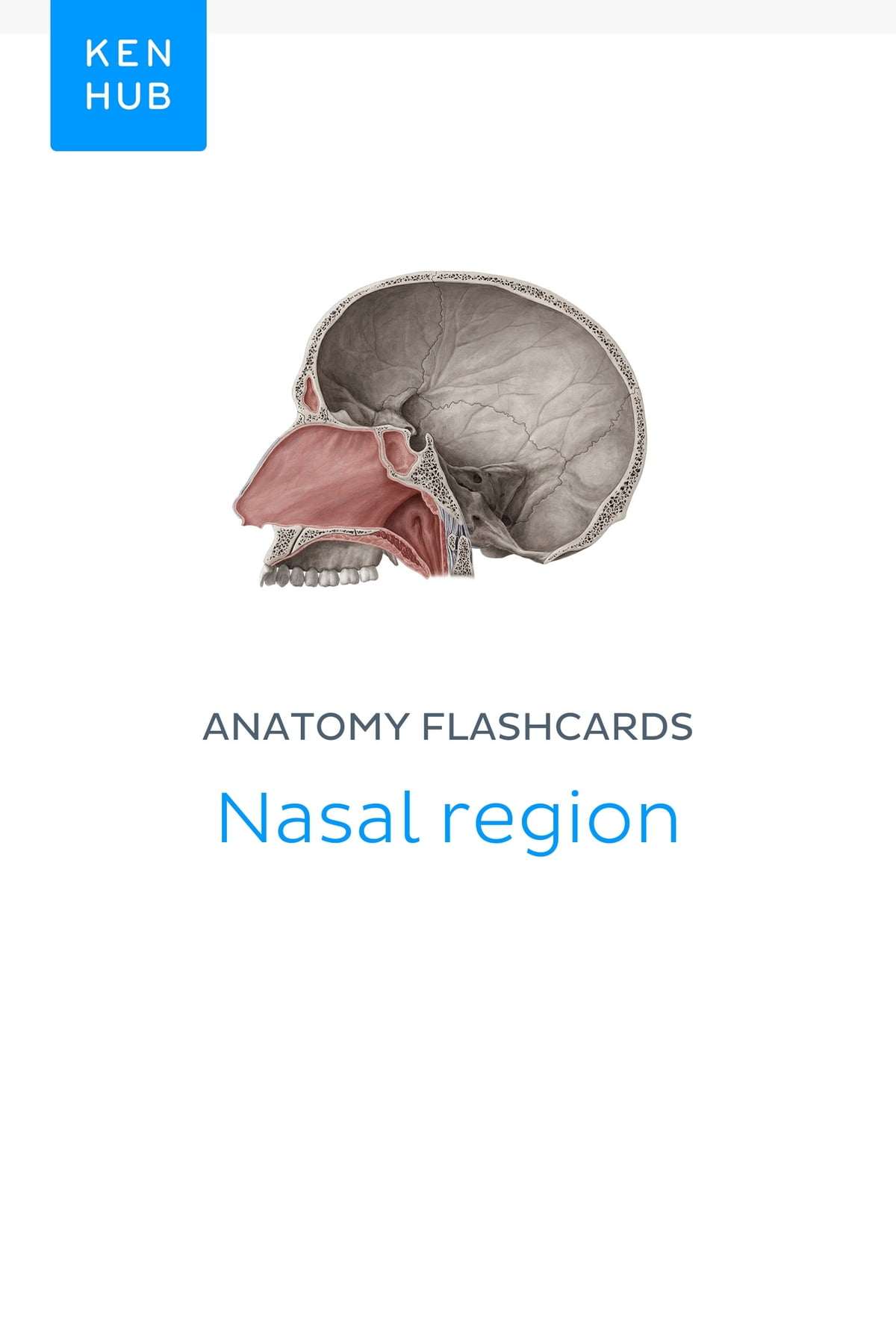 Anatomy Flashcards Nasal Region Ebook By Kenhub 9783962980788