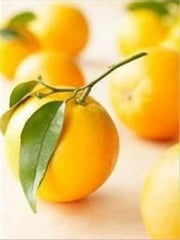How to Grow an Orange Tree ebook by Cubby Barnes