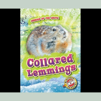 Collared Lemmings audiobook by Rebecca Pettiford