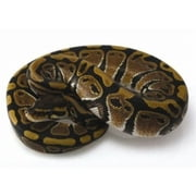 Ball Python Care for Beginners ebook by Harper Burns