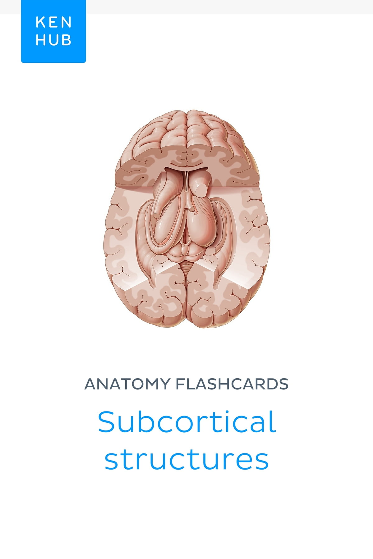 Anatomy Flashcards Subcortical Structures Ebook By Kenhub