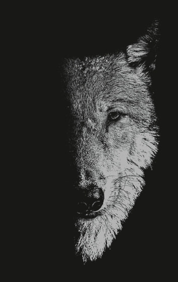 In the company of wolves - Werewolves, wolves and wild children ebook by