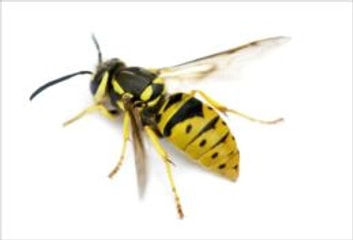A Quick and Easy Guide on How to Get Rid of Yellow Jackets ebook by Orlando French