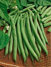 A Crash Course on How to Grow Bush Beans ebook by Wendy Miles