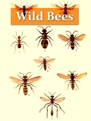 Wild Bees, Wasps and Ants and Other Stinging Insects [Illustrated] ebook by Edward Saunders