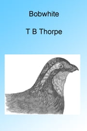 Bobwhite ebook by Thomas Bangs Thorpe
