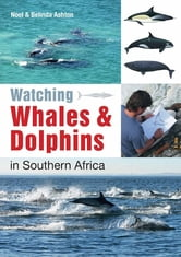 Watching Whales & Dolphins in Southern Africa ebook by Noel Ashton,Belinda Ashton
