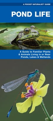 Pond Life - A Folding Pocket Guide to Familiar Plants & Animals Living in or Near Ponds, Lakes & Wetlands ebook by James Kavanagh,Raymond Leung