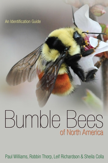 Bumble Bees of North America - An Identification Guide eBook by Paul H. Williams,Robbin W. Thorp,Leif L. Richardson,Sheila R. Colla