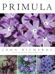 Primula ebook by John Richards