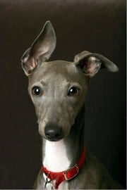 Italian Greyhounds for Beginners ebook by Estella Scott