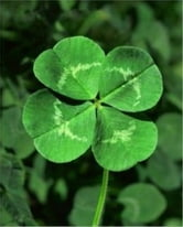 How To Get Rid of Clover ebook by Rogelio Brown