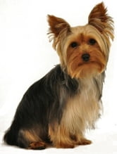 Yorkshire Terrier Training For Beginners ebook by Frank Washington