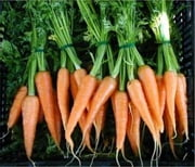 A Crash Course on How to Grow Carrots ebook by Wendy Miles
