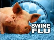 What You Need To Know About Swine Flu: History, Treatment and Prevention ebook by Nick Brewster