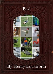 Bird ebook by Henry Lockworth,Eliza Chairwood,Bradley Smith