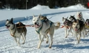 Dog Sledding for Beginners ebook by Kenny Swardson