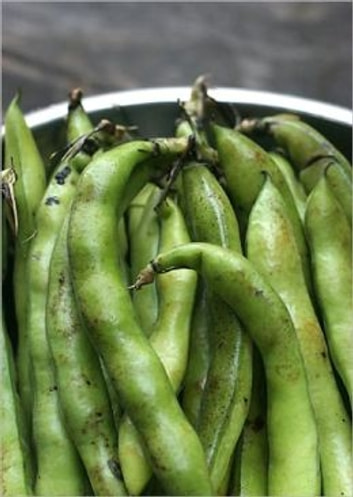 A Crash Course on How to Grow Broad Beans ebook by Errol Flynn