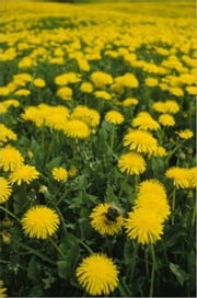 How To Get Rid of Dandelions ebook by Rogelio Brown