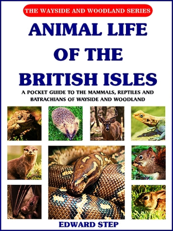 Animal Life of the British Isles - A Pocket Guide to the Mammals, Reptiles and Batrachians of Wayside and Woodland (Illustrations) ebook by Edward Step,W. J. Stokoe